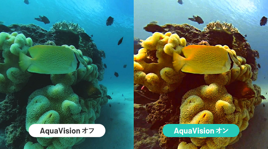 Insta360 ONE X2 | 水中世界をさらに美しく