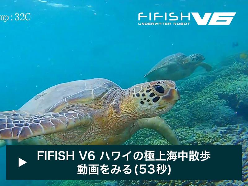 QYSEA | 水中ドローン FIFISH V6で撮影したハワイの極上海中散歩